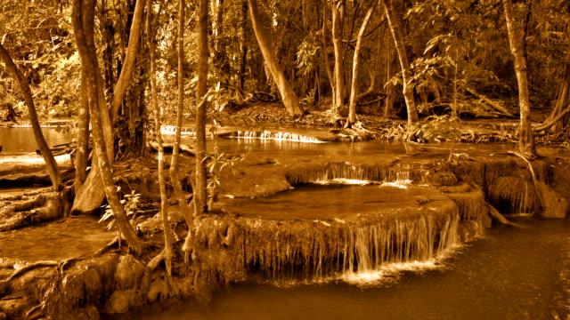 Stream i skogen