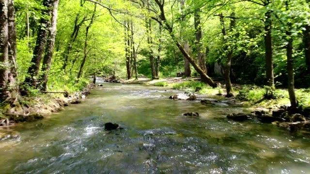 vídeos y material grabado en eventos de stock de arroyo en el bosque - área silvestre