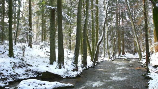 vídeos de stock, filmes e b-roll de pan stream na floresta de inverno (4:2: 2) - floresta da bavária
