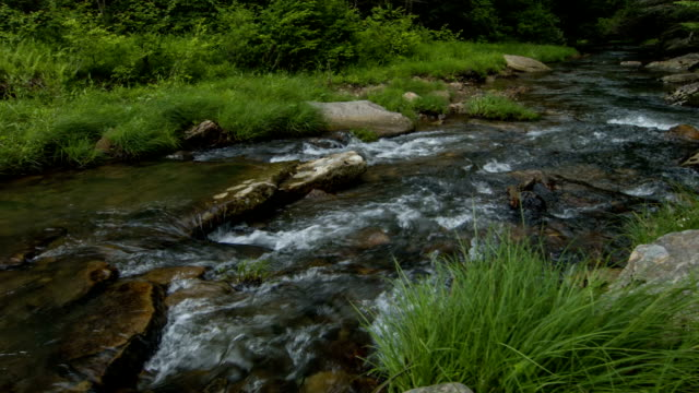 stream in woodland - aomori prefecture stock videos & royalty-free footage