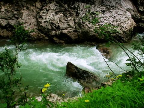 vídeos y material grabado en eventos de stock de corriente, kurdjips al río - árbol de hoja caduca
