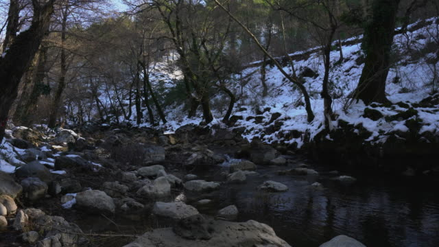 stream mist frozen winter wilderness forest - area selvatica video stock e b–roll