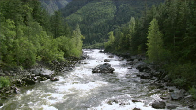 Stream of water flowing in a coniferous forest in Alaska, USA