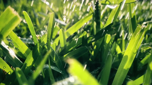 stream of water spraying from garden hose on grass - irrigation equipment stock videos & royalty-free footage