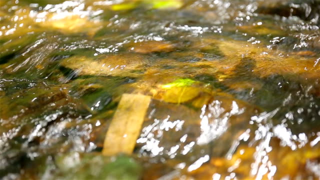 stream - stream body of water stock videos & royalty-free footage