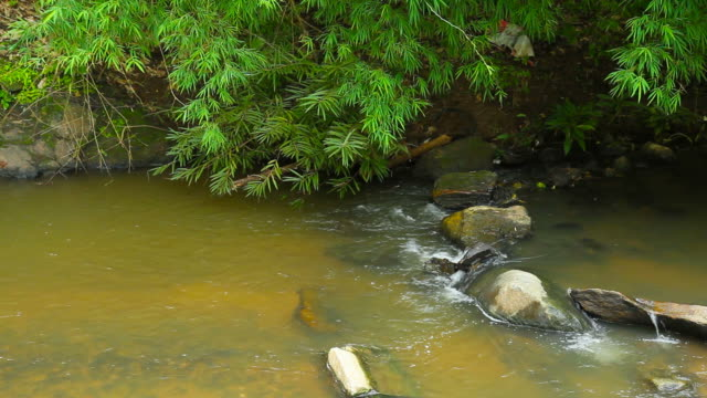 stream water flowing in the forest - campo gravitazionale video stock e b–roll
