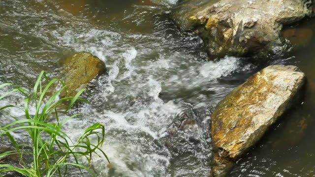 Stream Water Flowing in the forest