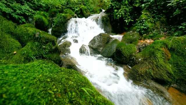 stream water flowing - moss stock videos & royalty-free footage