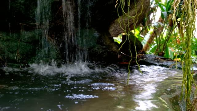 Ruisseau cascade dans la forêt verte