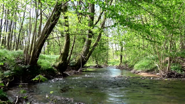 stream with alluvial forest - alder tree stock videos & royalty-free footage