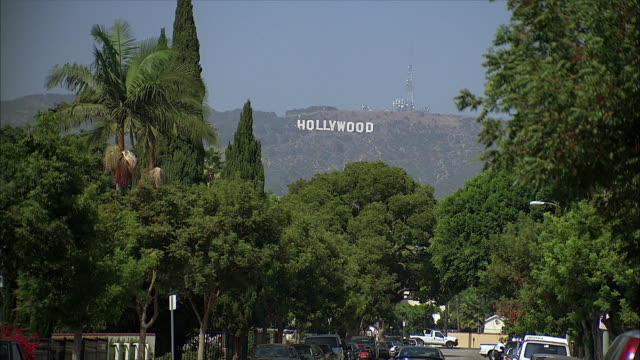 street and hollywood sign on hill - fan palm tree stock videos & royalty-free footage