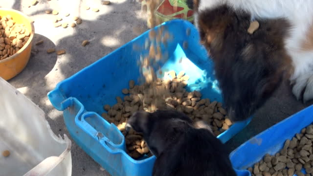 street dogs and street cats being fed by shelter volunteers. - pouring stock videos & royalty-free footage