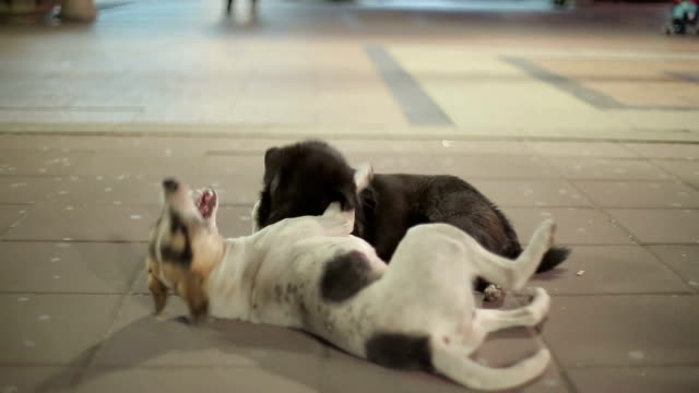 street dogs playing - rabies stock videos & royalty-free footage