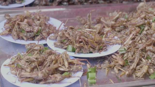street food in thailand - insect stock videos & royalty-free footage