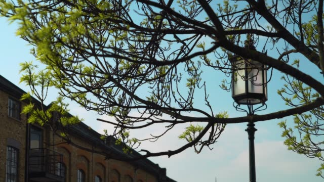 Street lamp against blue sky as tree branches sway