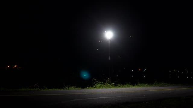 Street Lamp at night with insects