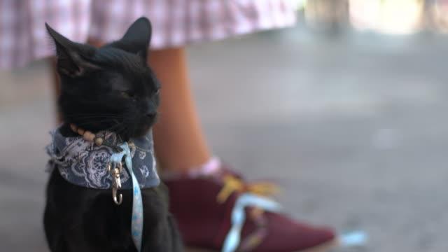 street musician's pet cat, cu - frau gefesselt stock-videos und b-roll-filmmaterial
