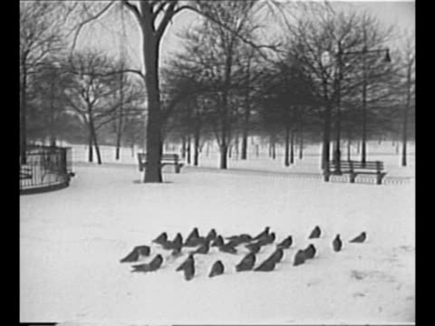 vídeos de stock e filmes b-roll de street snow cleaners push shovels along mostly cleared street in new york city after huge snowstorm there / flock of birds sits on snowy area in park... - forma de água