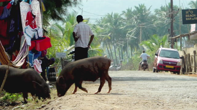 ms street vendor standing by his stall, pigs grazing on side of dirt road / india - hand an der hüfte stock-videos und b-roll-filmmaterial
