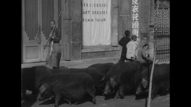 vs street with pigs being herded through street lined with vendors / herd of sheep and bactrian camels / note exact month/day not known - 偶蹄類点の映像素材/bロール