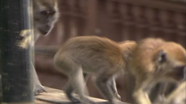vídeos de stock e filmes b-roll de streetscape in malaysia - grupo mediano de animales