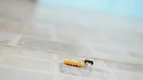 kraft ant - one animal stock-videos und b-roll-filmmaterial
