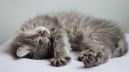 Stretching sleepy kitten
