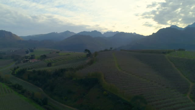 a striking aerial over lush vineyards on low hills at dusk on a sunny day - cape town, south africa - 西ケープ州点の映像素材/bロール