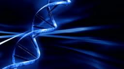 DNA string,seamless loop