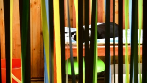 vidéos et rushes de strip blind of multicoloured door fly curtain screen in kitchen - editorial
