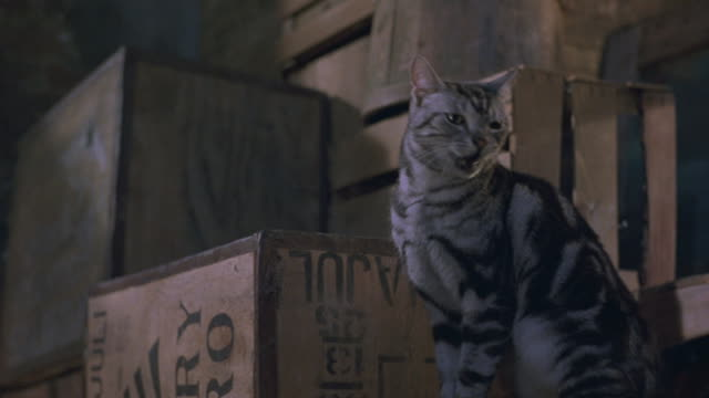 A striped cat stands near wooden crates and a gray cat jumps up and hisses.
