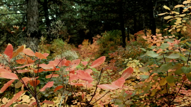 stroll in autumn forest - copse stock videos & royalty-free footage