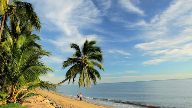 strolling on holloways beach, cairns, queensland, australia, southern hemisphere, - southern hemisphere stock videos & royalty-free footage