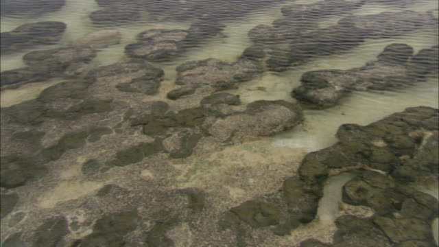 stromatolites cover the seabed along a shoreline in shark bay. - ocean floor stock videos & royalty-free footage