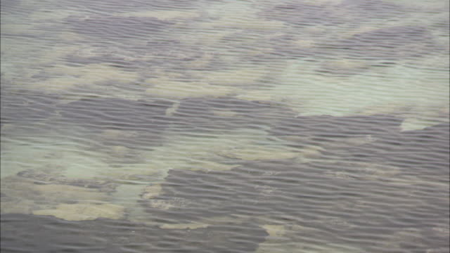 stromatolites cover the seabed in shark bay near the shoreline. - shark bay stock videos & royalty-free footage