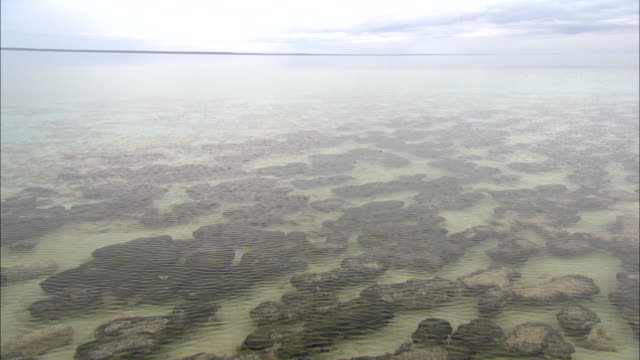 stromatolites form on the seabed at shark bay in western australia. - ocean floor stock videos & royalty-free footage
