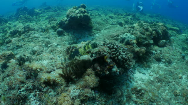 Strong current in undersea coral reef