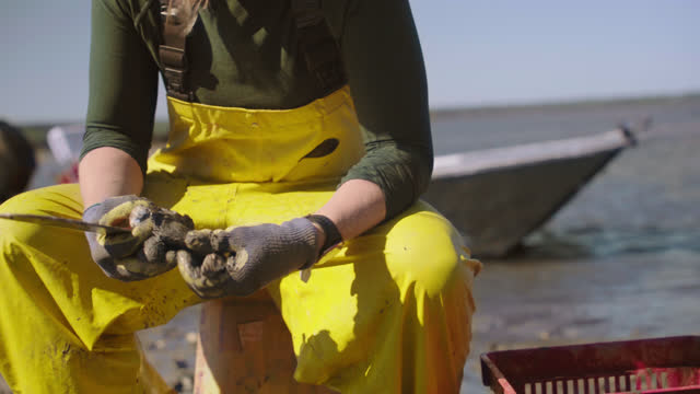 vidéos et rushes de cu. strong fisherwoman sits on a bucket, uses a knife to separate oysters from larger clusters and throws the individual oysters into a basket in a salt marsh along the intracoastal waterway - pêcheur