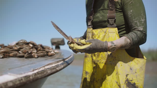 strong fisherwoman uses a knife to separate oysters from larger clusters and throws the individual oysters into a basket in a salt marsh along the intracoastal waterway - fischerboot stock-videos und b-roll-filmmaterial