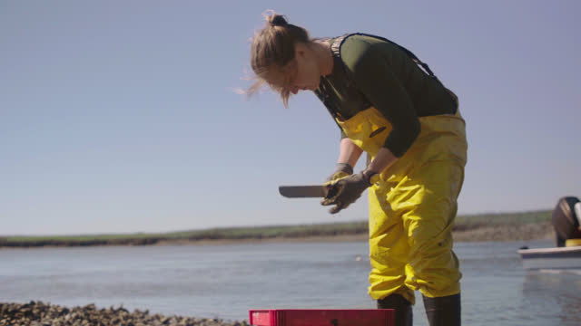 strong fisherwoman uses a knife to separate oysters from larger clusters and throws the individual oysters into a basket in a salt marsh along the intracoastal waterway - ミヤコドリ点の映像素材/bロール