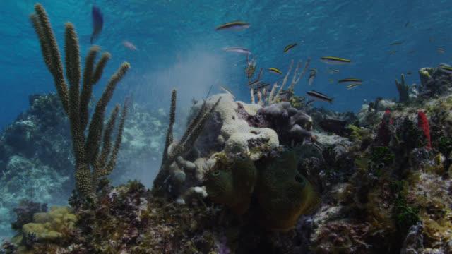 stockvideo's en b-roll-footage met strong ocean current blasts coral on reef, bahamas - bimini