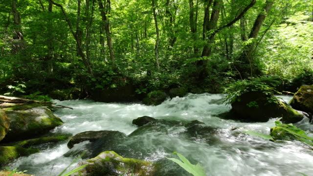 strong stream and green leaf
