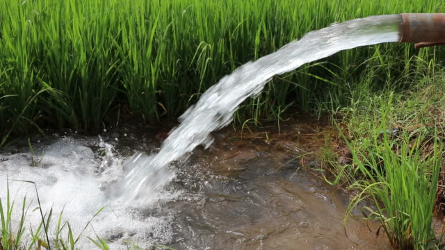 strong water flows from the pipes into green rice fields. - water pump stock videos & royalty-free footage
