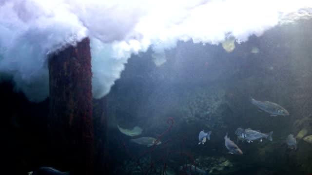 vídeos de stock, filmes e b-roll de ondas fortes - peixe de água salgada