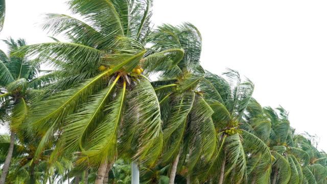 Starker Wind gegen die Palme am Strand