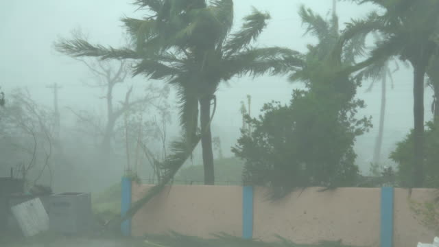 strong wind and rain from super typhoon mangkhut sweeps across a town - palm tree stock videos & royalty-free footage