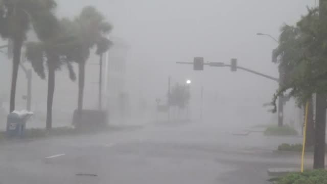 strong wind and rain pelt and bend palm trees as hurricane isaac hits gulfport, mississippi. - tropical storm stock videos & royalty-free footage