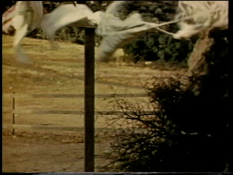 vídeos de stock e filmes b-roll de 1941 ms strong wind blowing a laundry line with clothes hanging on it / united states  - durabilidade