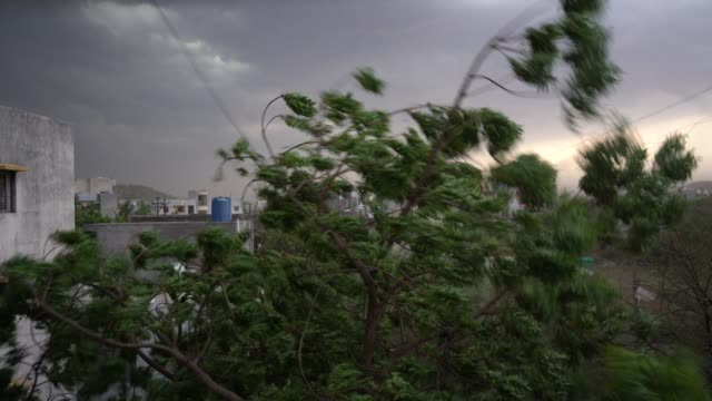 strong wind, blowing wind, rain storm, storm blowing shaking the trees. - overcast stock videos & royalty-free footage