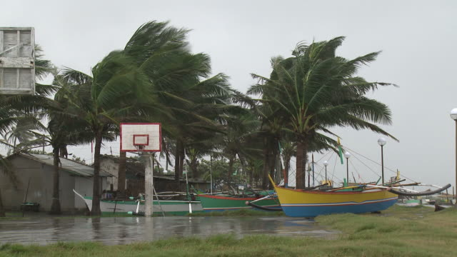 strong wind blows palm trees and small fishing boat on land. super typhoon megi or juan, ne luzon, philippines oct 2010 / audio - record breaking stock videos & royalty-free footage